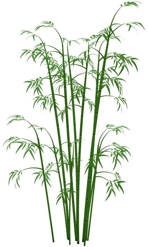 Bamboo plant png. Transparent images all image