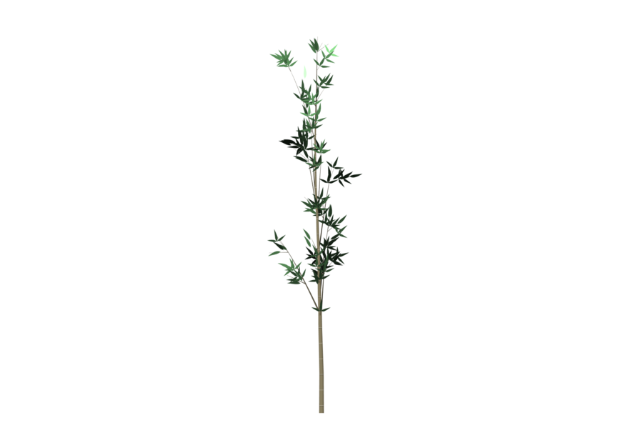 Bamboo plant png. Tree by yourtutorials on