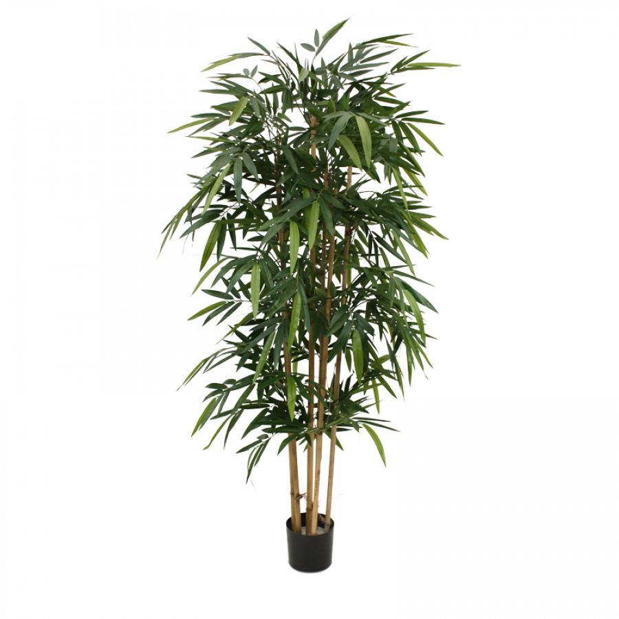Bamboo plant png. Cm replica