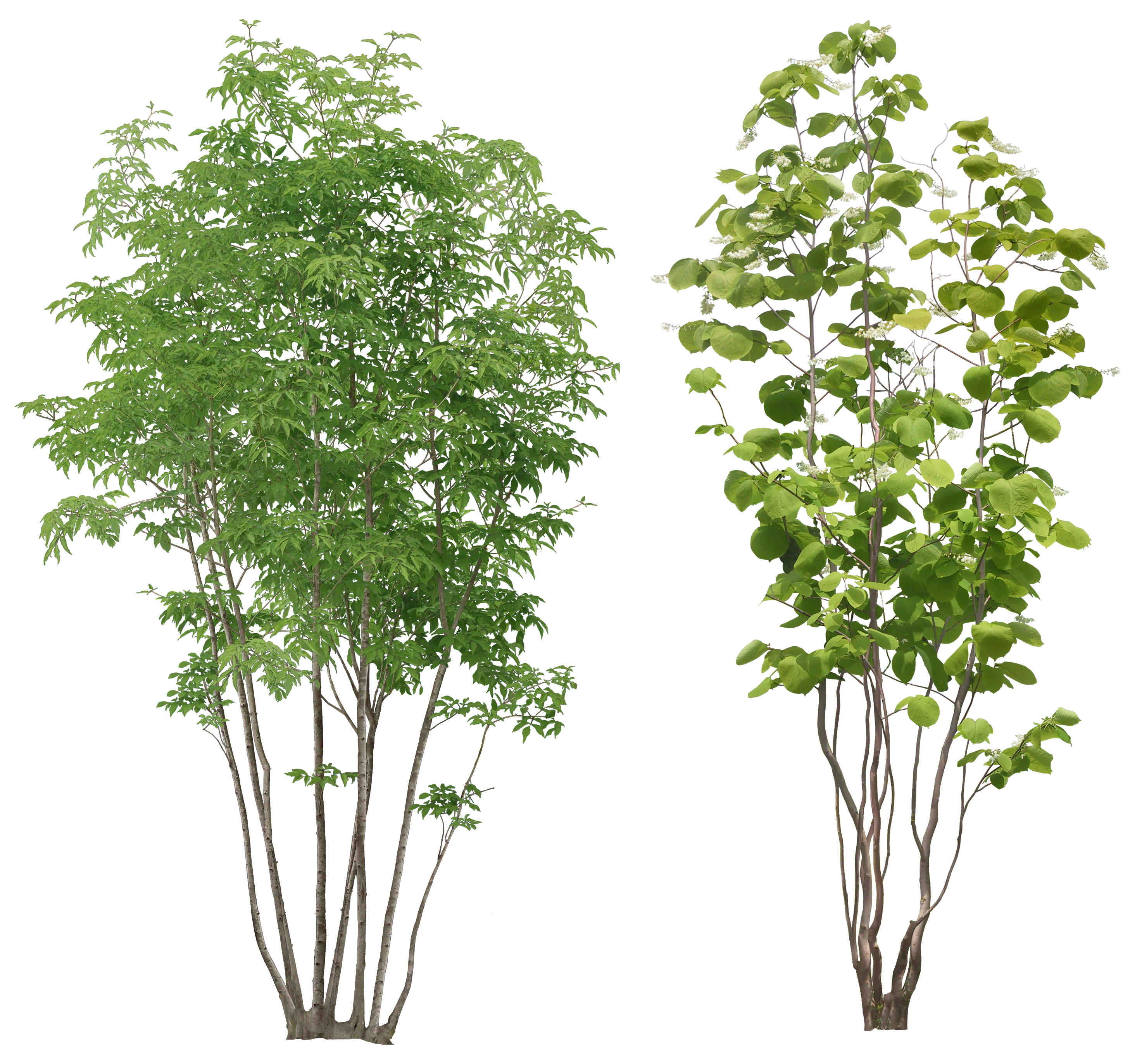Tree image planten plant. Forest trees png svg free library