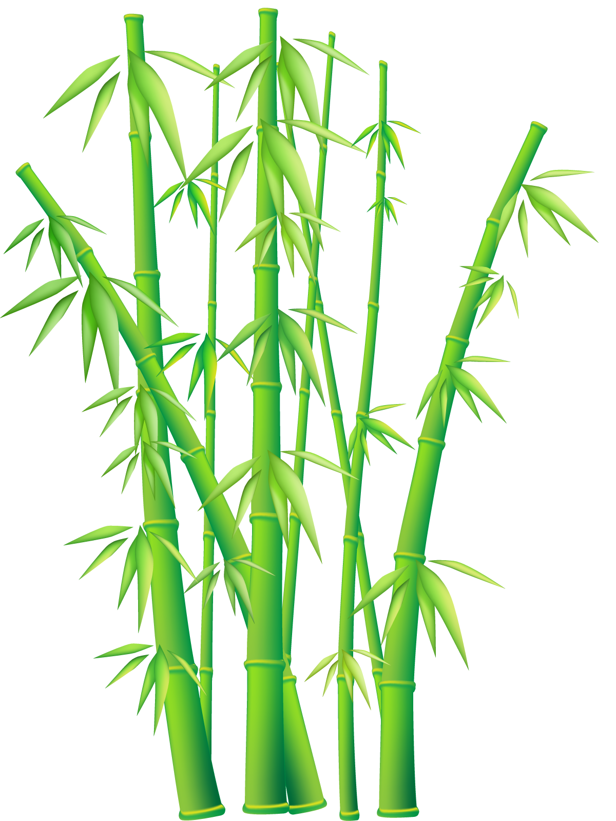 Bamboo png. Transparent images all file