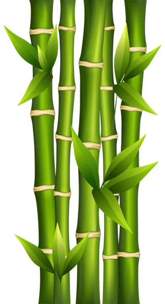 Bamboo shoots png. Clipart image abstract pinterest