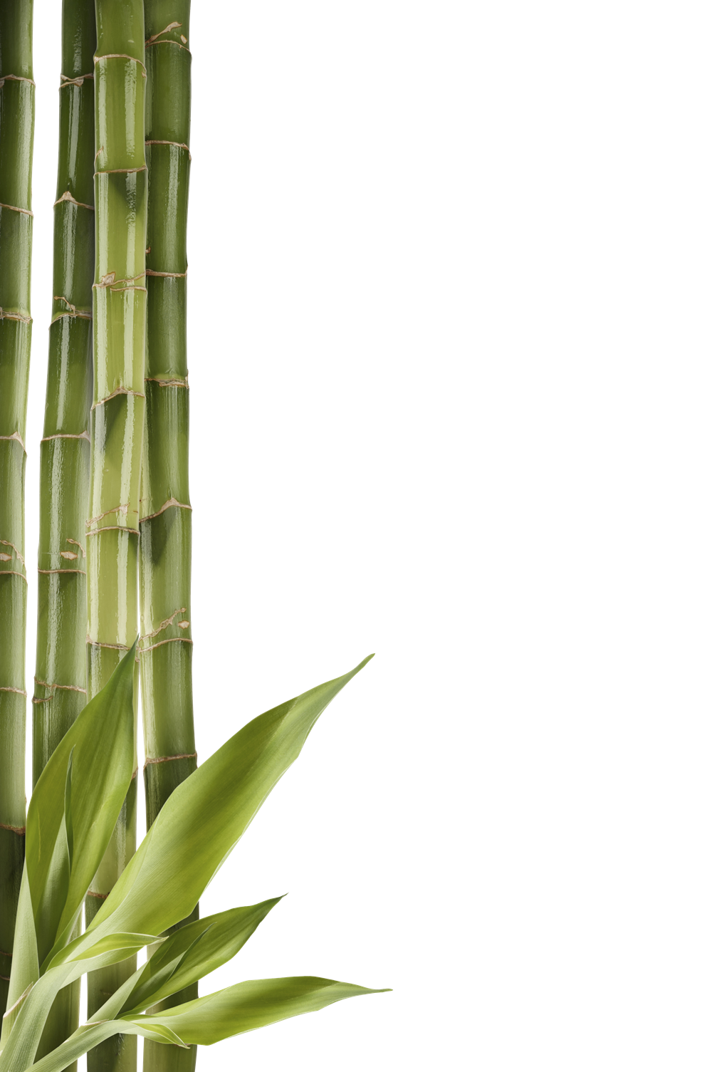 Cane transparent bamboo. Download images free icons