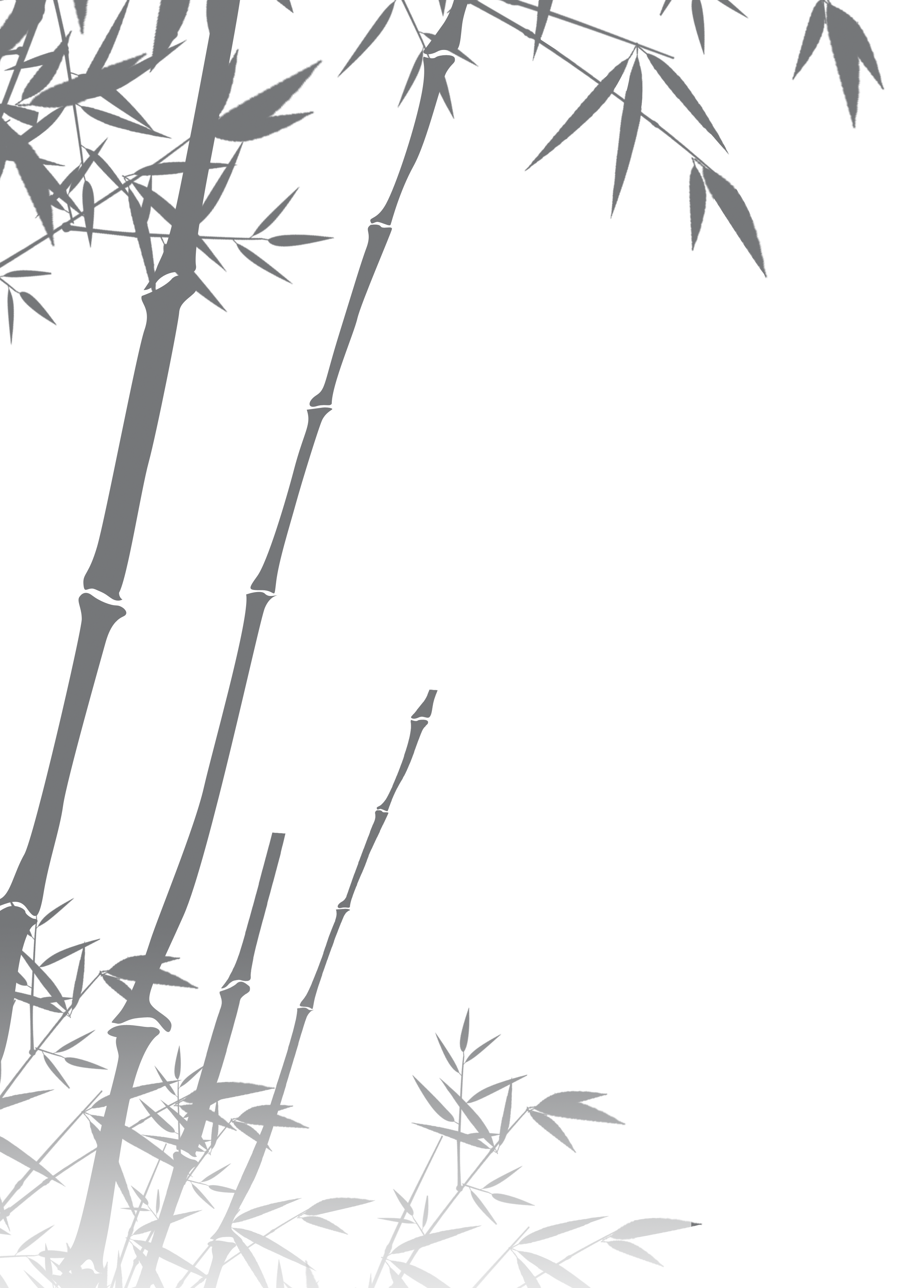 Bamboo silhouette png. Black and white transprent