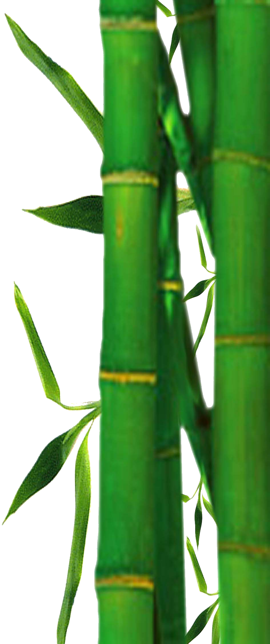 Bamboo texture png. Images free download