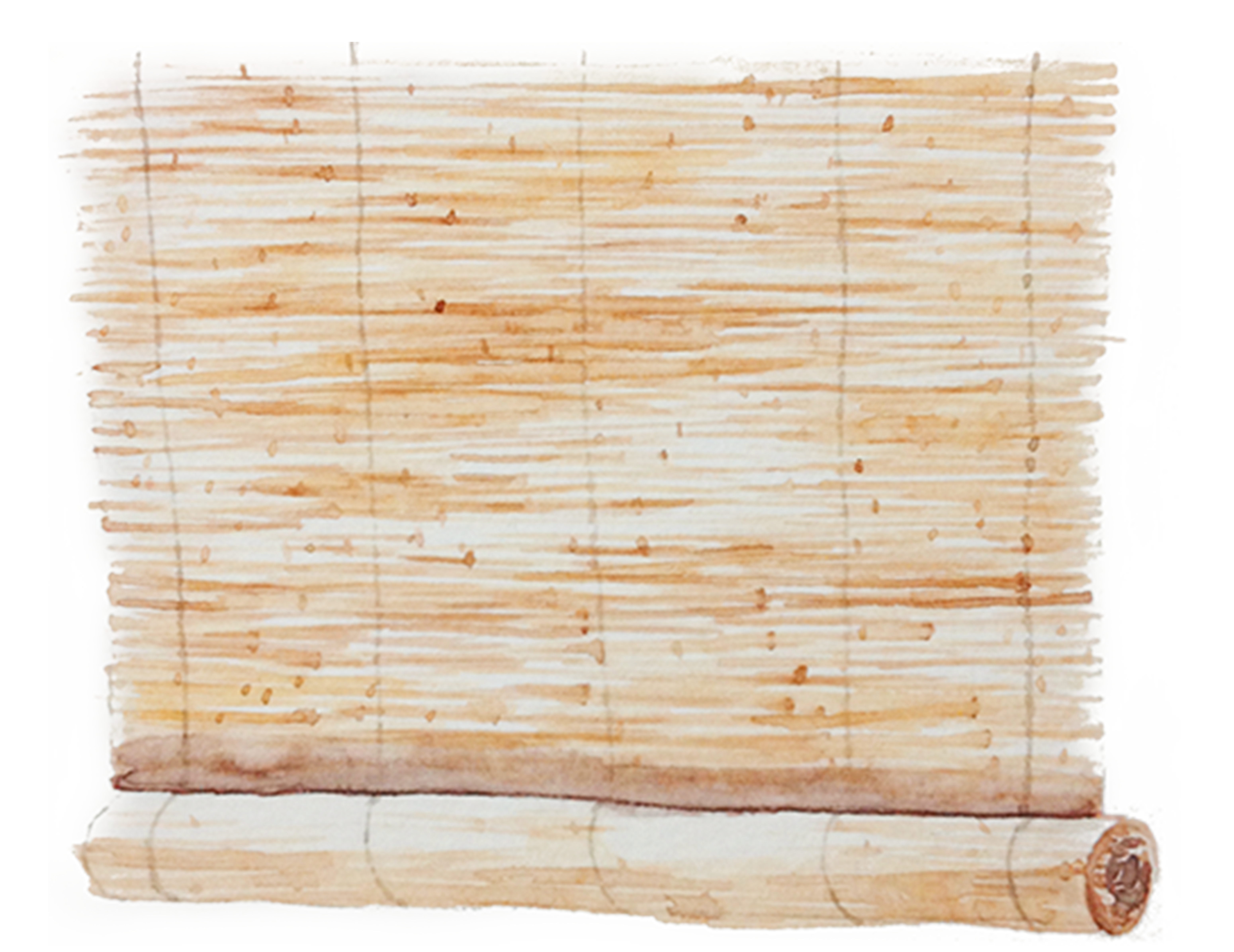 Bamboo texture png. Sushi download watercolor grass