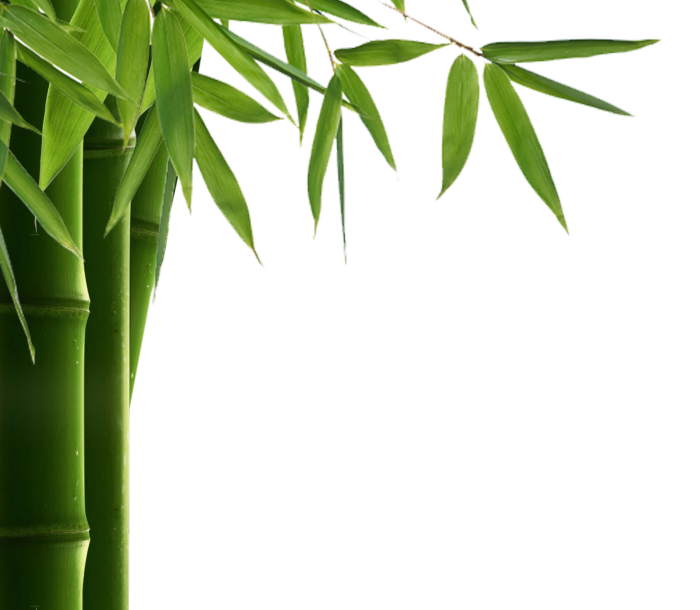 Vector hd leaf. Bamboo png clipart psd
