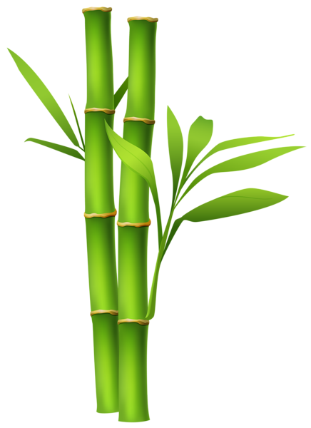 Bamboo vector png. Image gallery yopriceville high