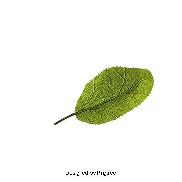 Leaves png images vectors. Vector banana freeuse download