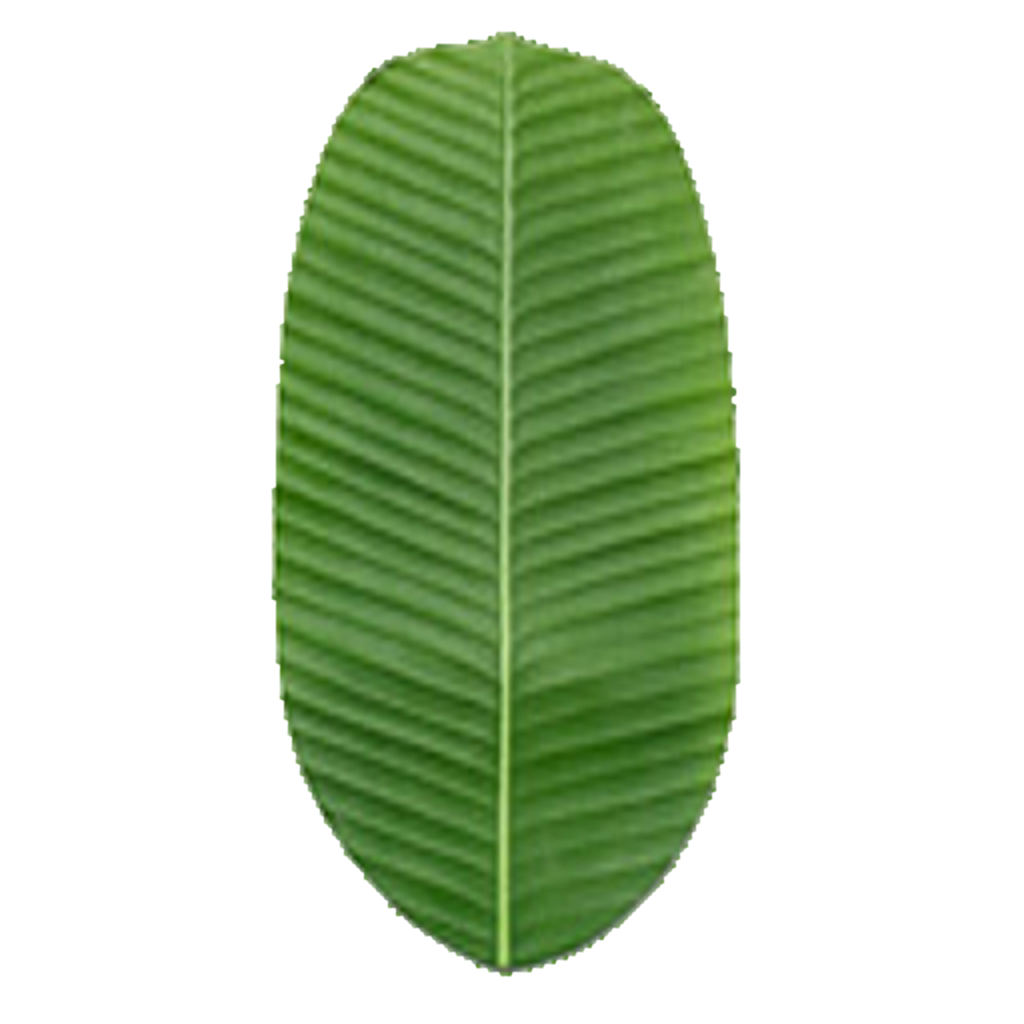 Palm leaf texture png. Seamless nature textures www