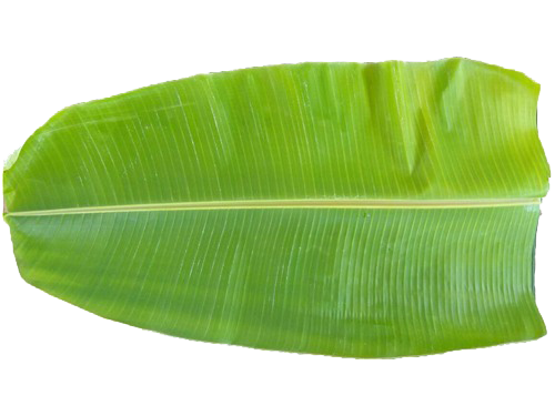 Banana leaf png. Per piece ft