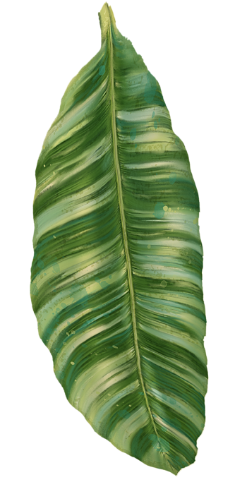 Banana leaves png. Image result for tropical