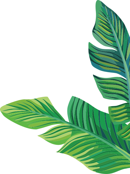 Banana leaves png. Leaf images in collection
