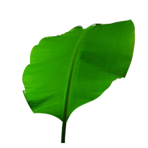 Banana leaves png. Leaf clipart images gallery