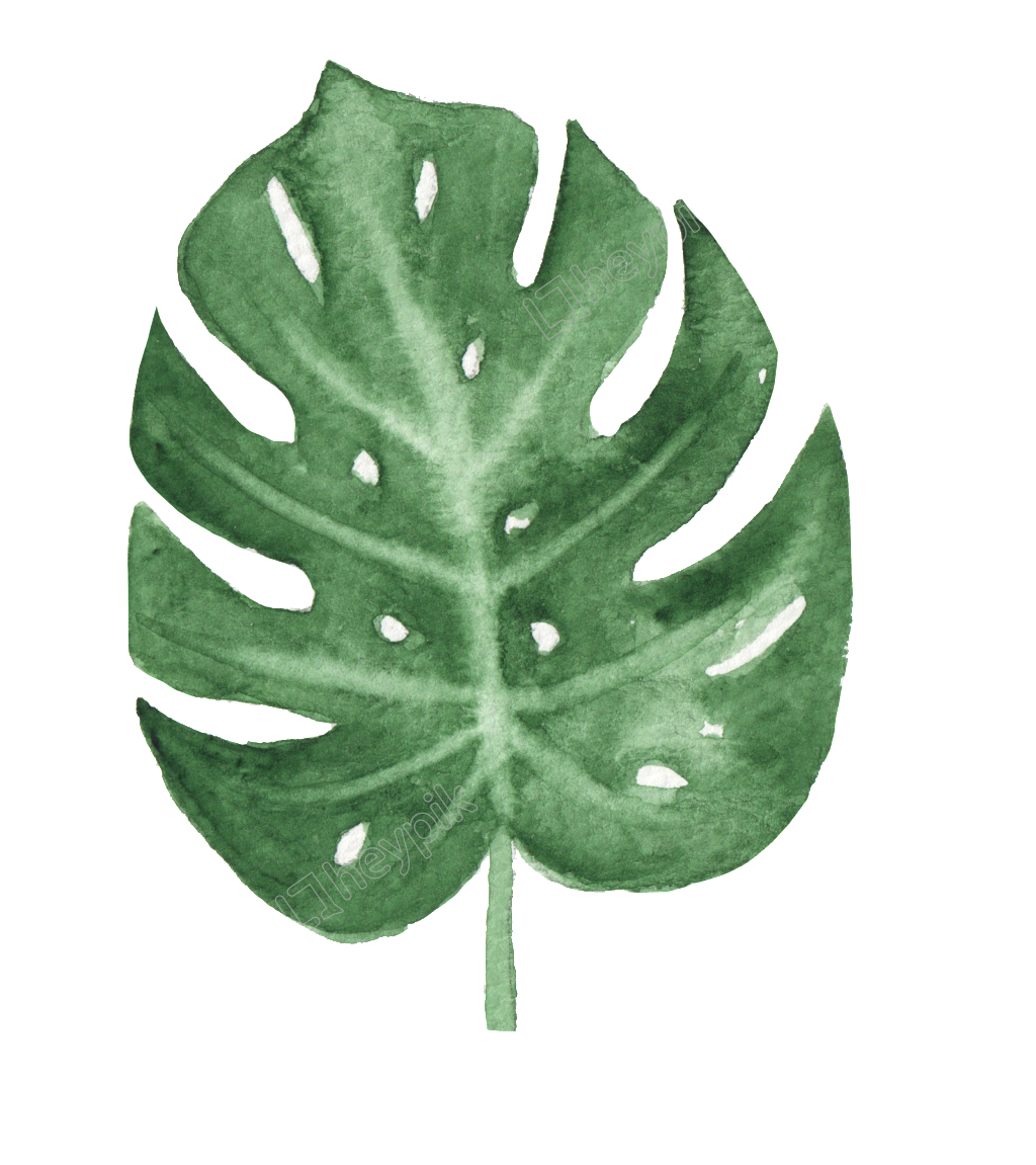 Banana leaves png. The green leaf watercolor