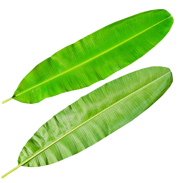 Banana leaves png. Rsmani