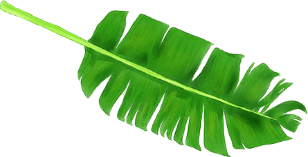 Banana leaves png. Images in collection page