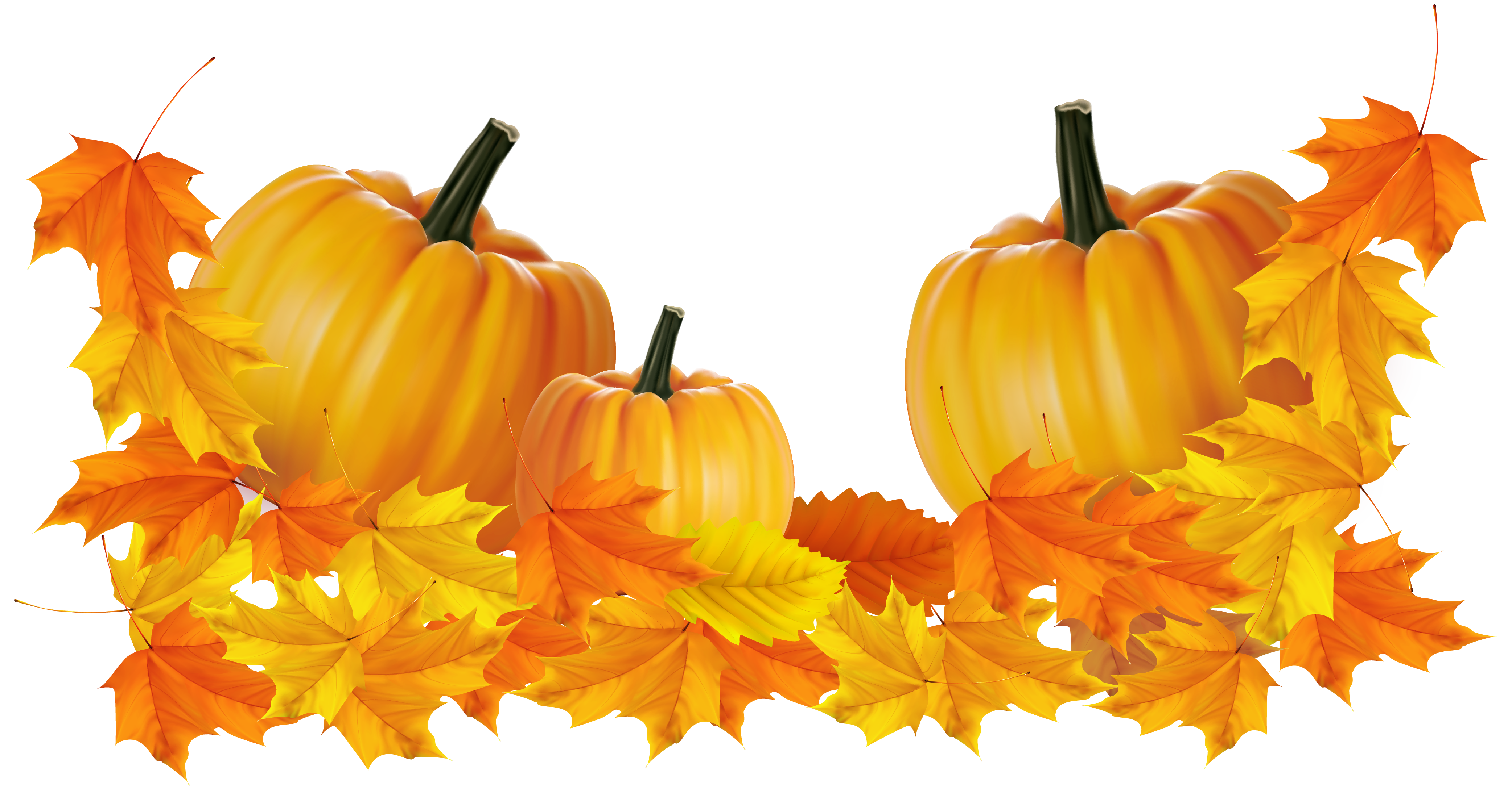 Thanksgiving borders png. Transparent pumpkin decor clipart