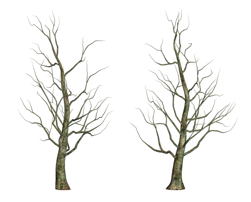 Bare branch png. Tree stock by roy