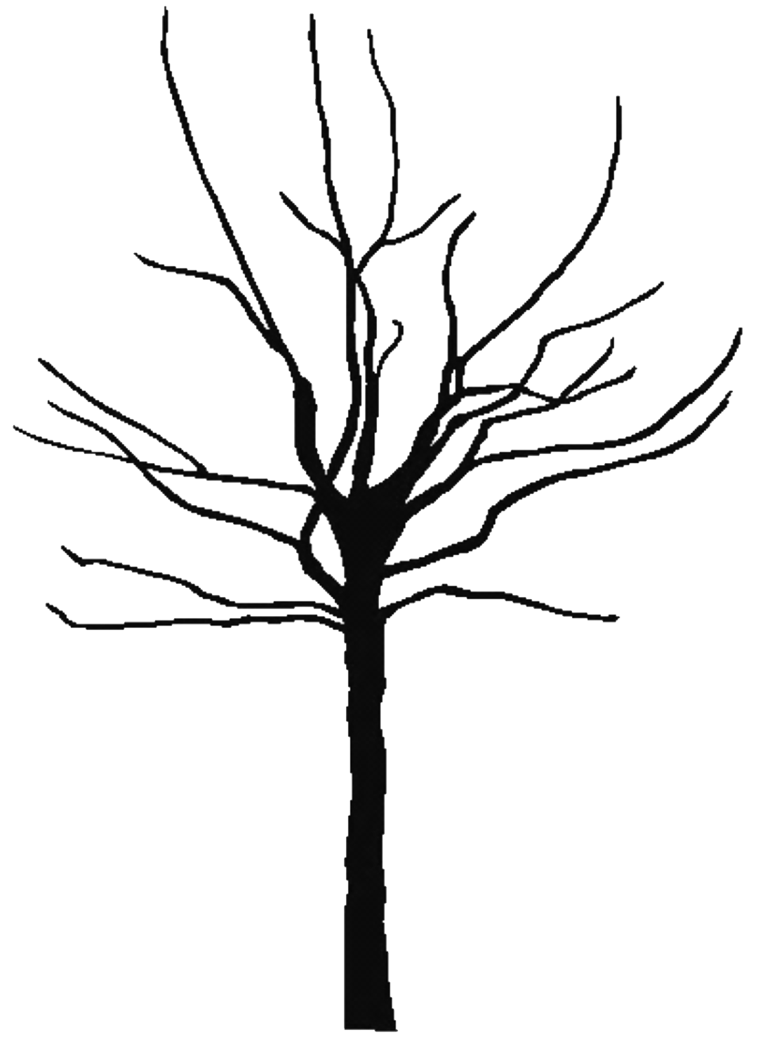 Bare branch png. Silhouette tree branches at