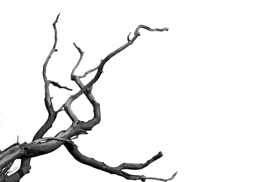 Branch png. Bare tree image