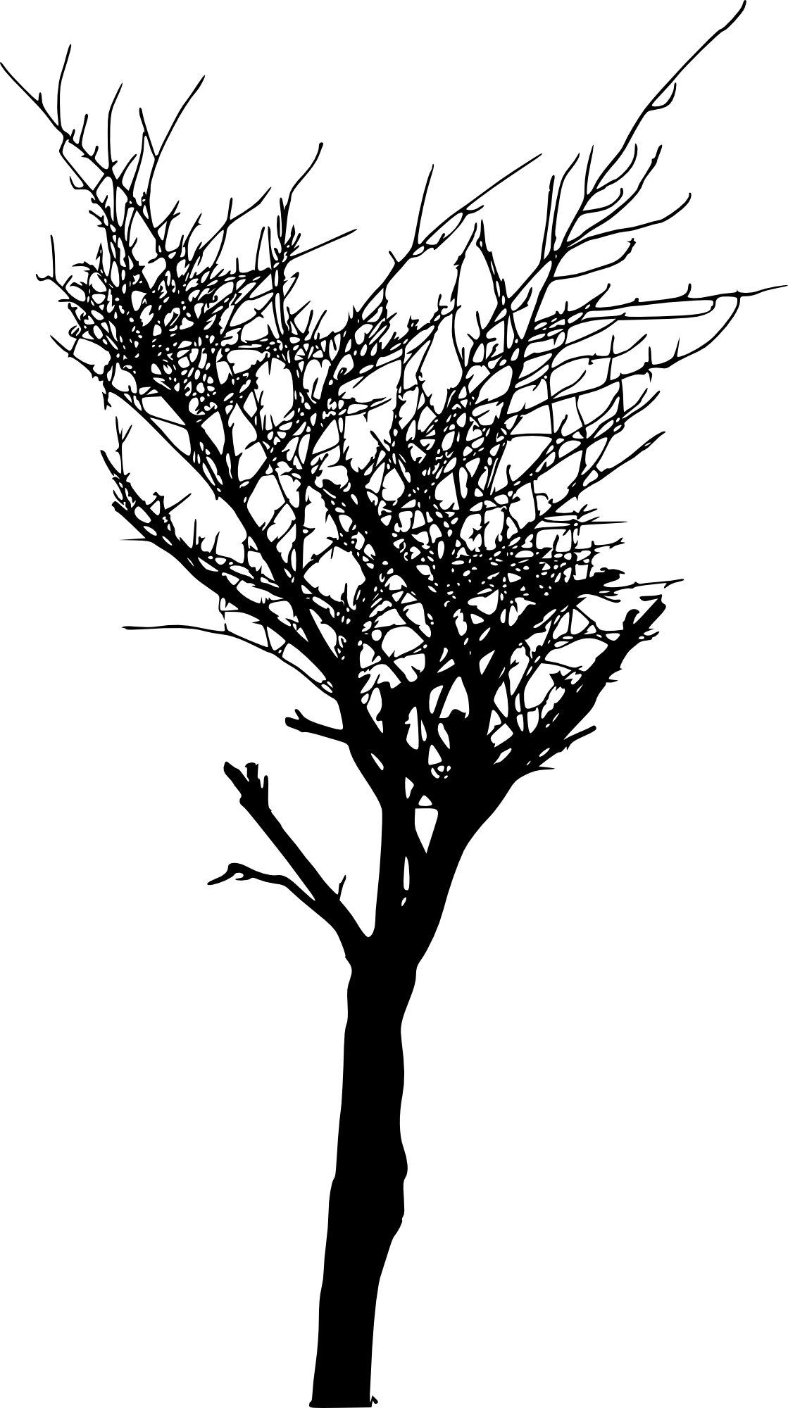bare tree png