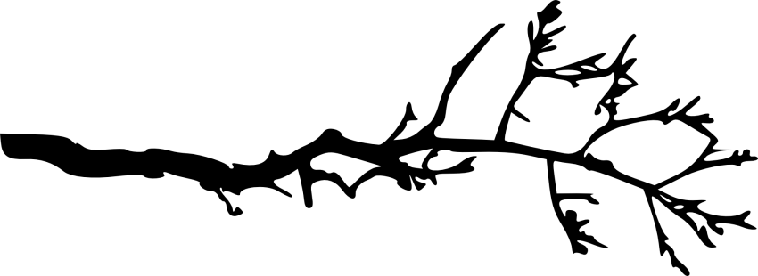Bare tree branch png. Simple free images toppng