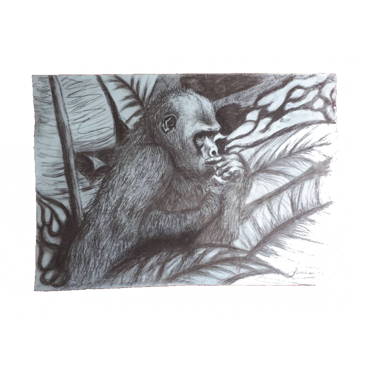 Picture with gorilla chopni. Drawing candle charcoal image library download