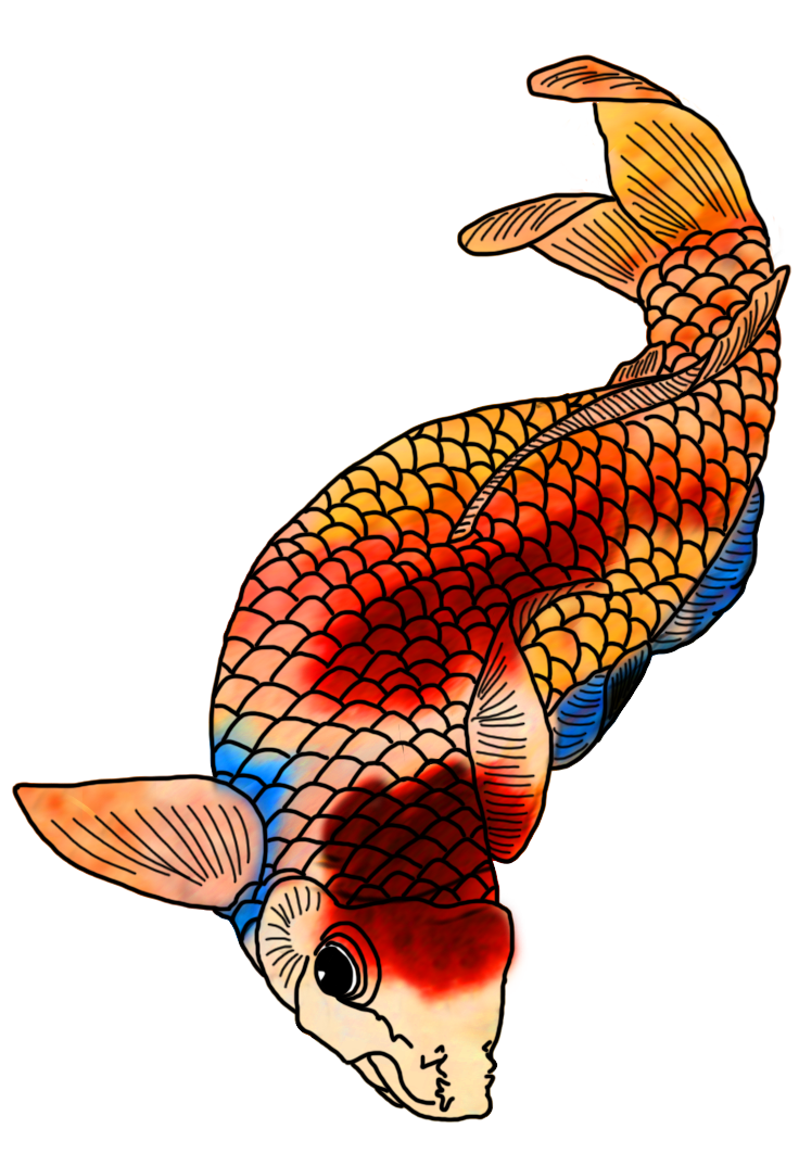 Colorful koi fish drawings. Drawing fluid colour banner royalty free download