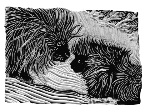 Bark drawing detailed. The twelve tribes porcupinies