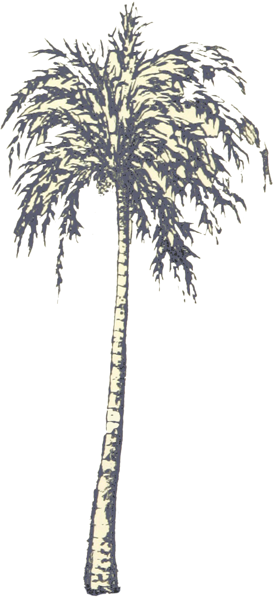 Bark drawing palm tree. Architecture for free