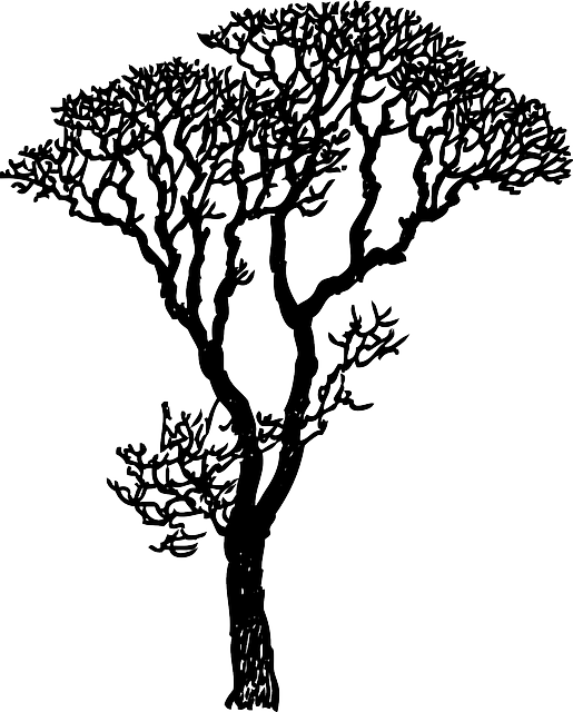 Bark Drawing Tree Transparent Clipart Free Download