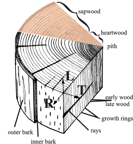 Bark drawing wood plank. Definition of the local