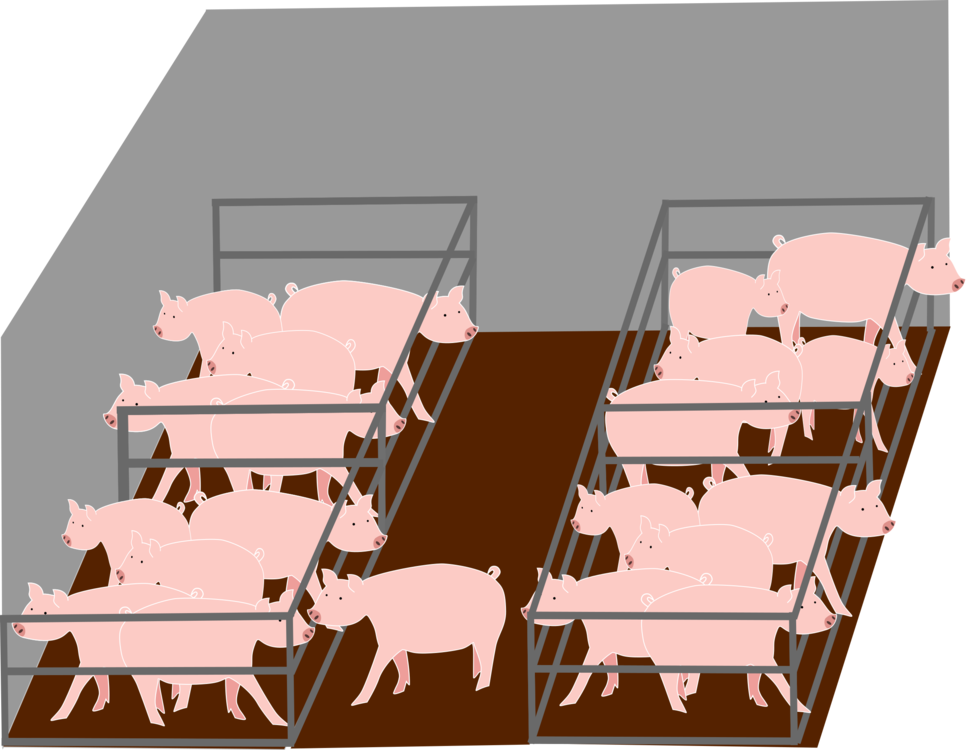 Barn clipart pig. Domestic intensive animal farming