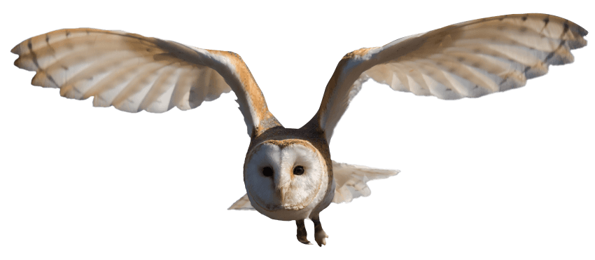 Barn owl png. Download images background toppng