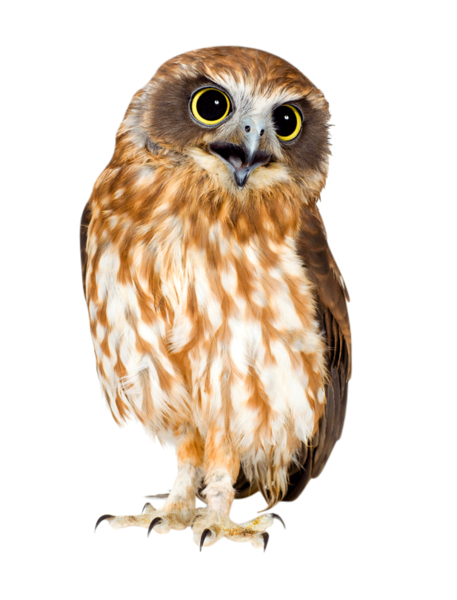 Barn owl png. Official psds share this