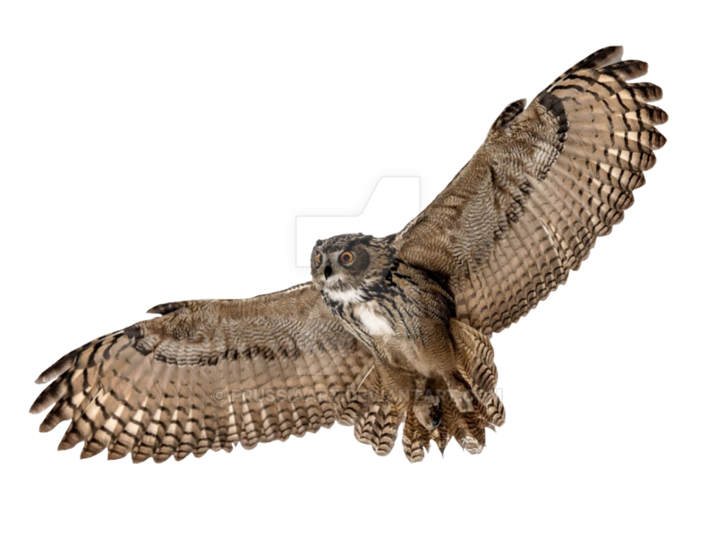 Barn owl png. Download free picture dlpng