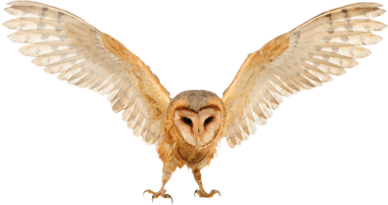 Barn owl png. Owls images free download