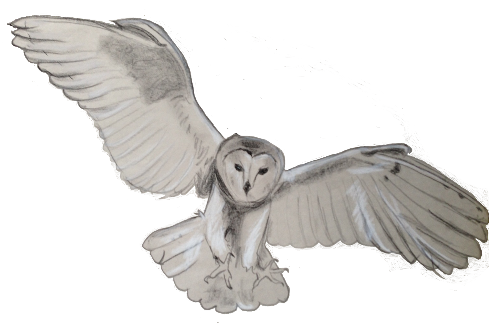 Barn owl png. Transparent mart