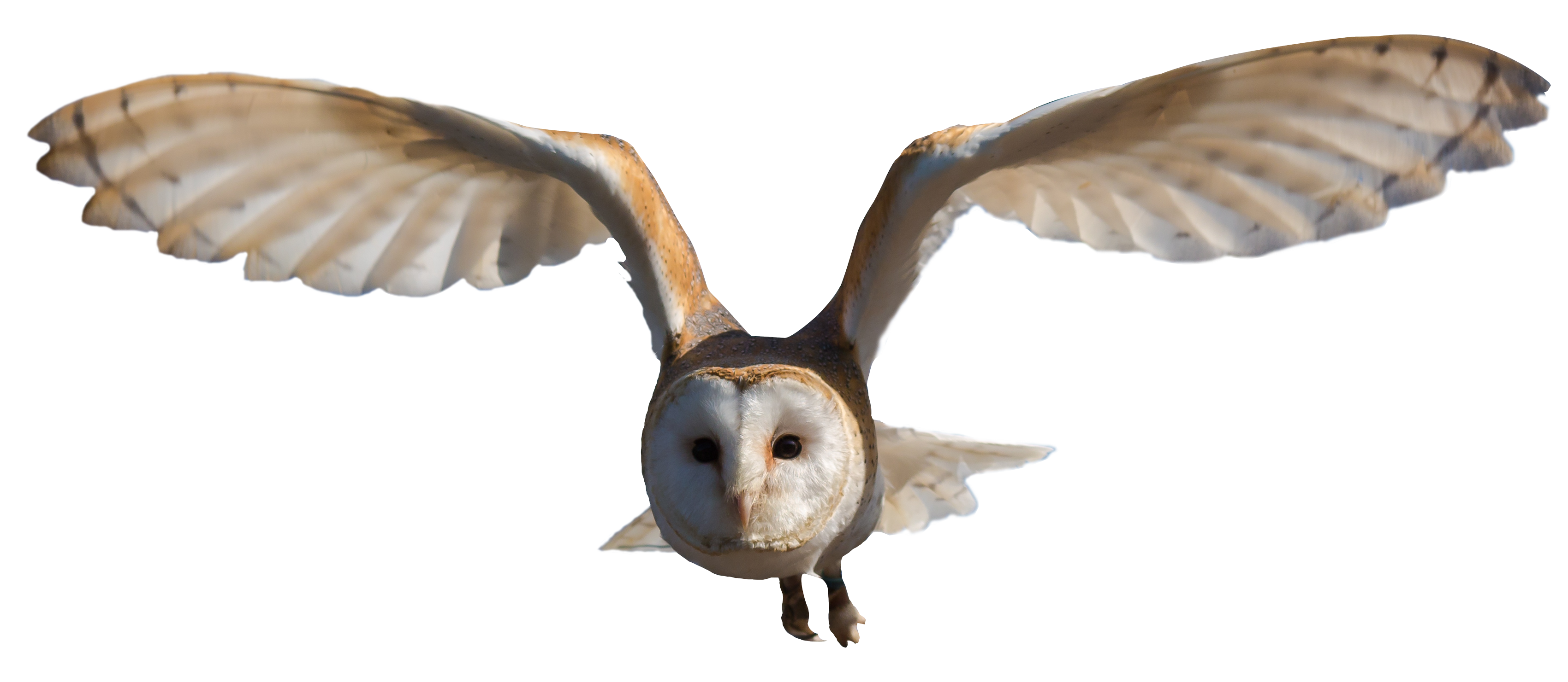 owl flying png