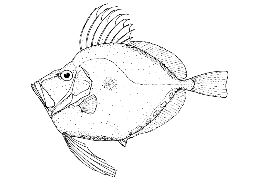 Drawing dory small. What s local eating