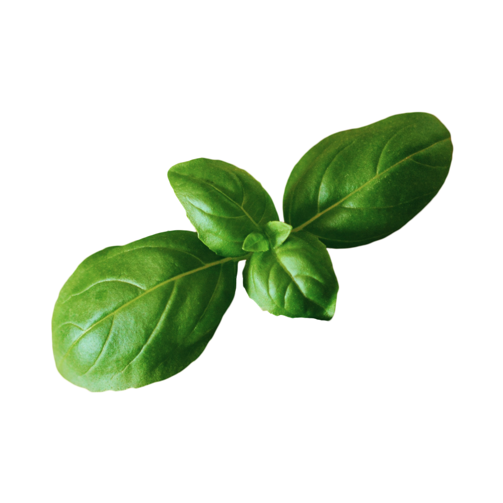 Basil plant png. Indoor grow guide the