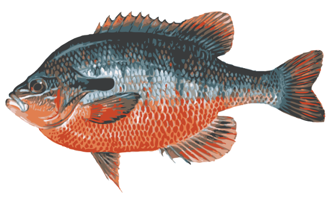 Bass clipart snapper fish. Great clip art of