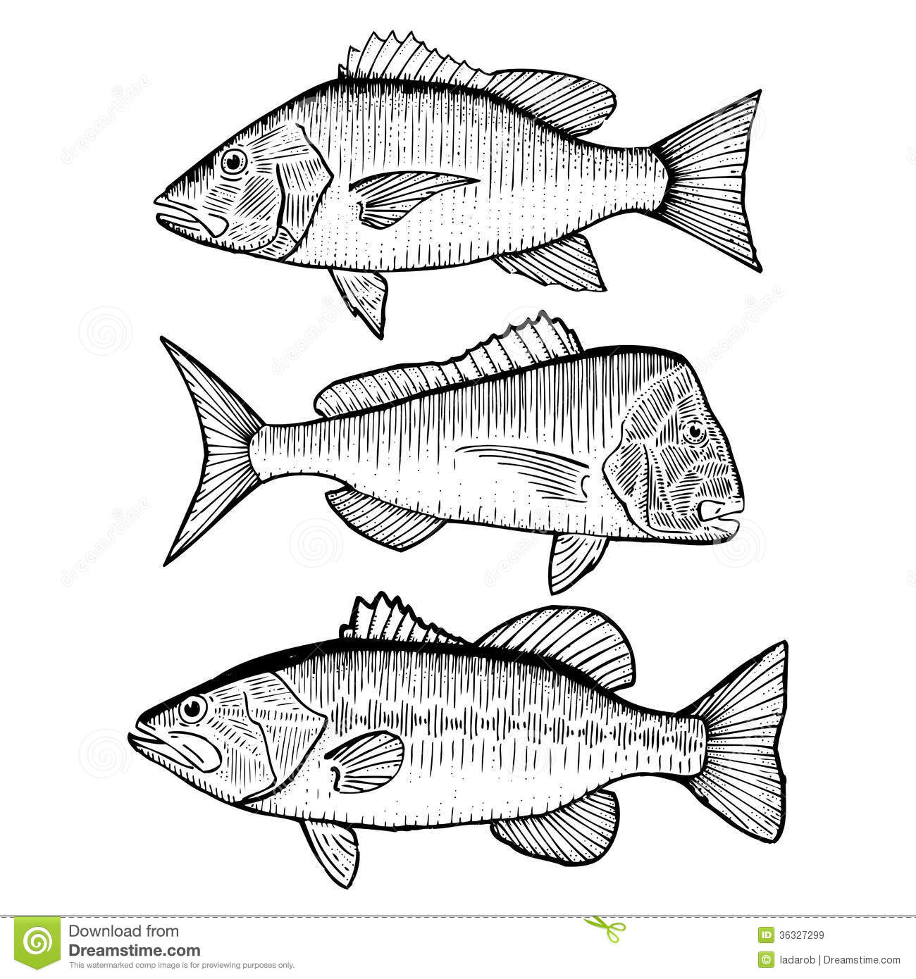 Illustrated stock vector illustration. Bass clipart snapper fish png royalty free download