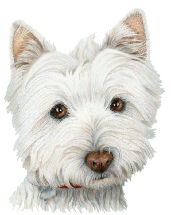 Bath drawing westie. Cute dog art yoga