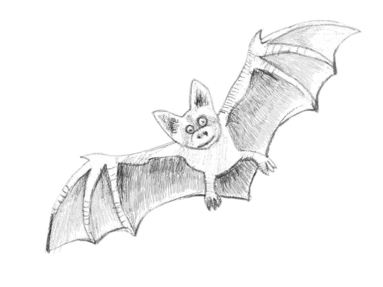 Bats clipart bumblebee bat. How to draw a