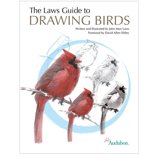 Bay drawing colored pencil. The laws guide to