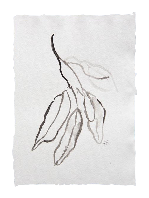 Bay drawing ink. Leaves in chairish
