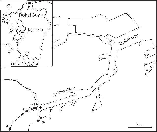 Bay drawing model figure. Map of dokai with