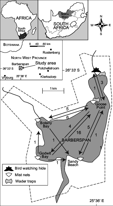 Bay drawing movement. Location of ringing sites